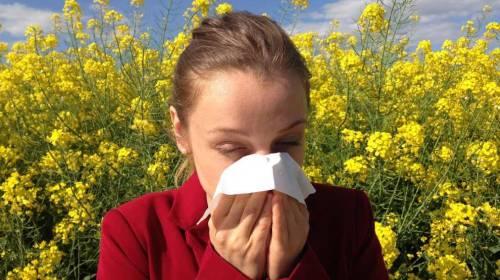 Alergija na polen - koji lek za alergiju na polen pomaže?