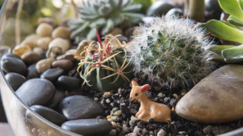 Napravite vrt u tegli