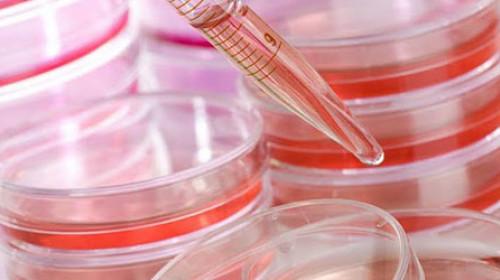 Naučnici stvorili matične ćelije koje ubijaju rak