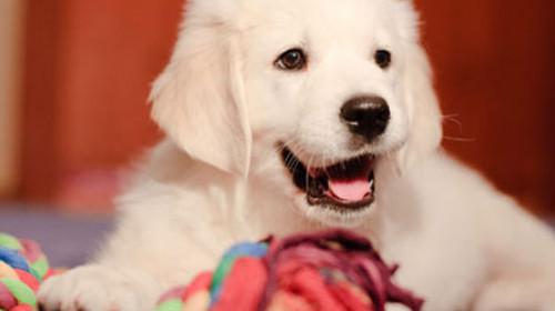 Kako da uklonite miris psa iz vašeg doma?
