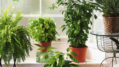 Nega sobnih biljaka tokom zime