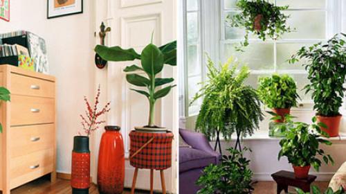Kako da sačuvate sobne biljke dok ste na odmoru?