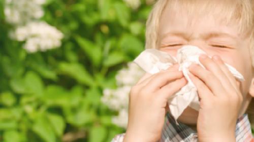 3, 2, 1... Kreću alergije
