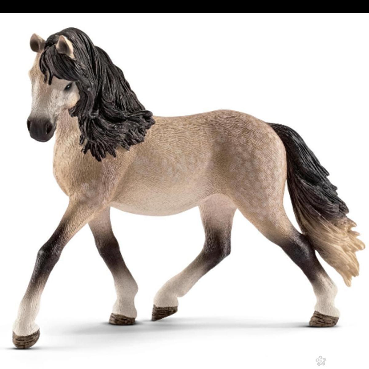 Andaluzijski kobila  13793