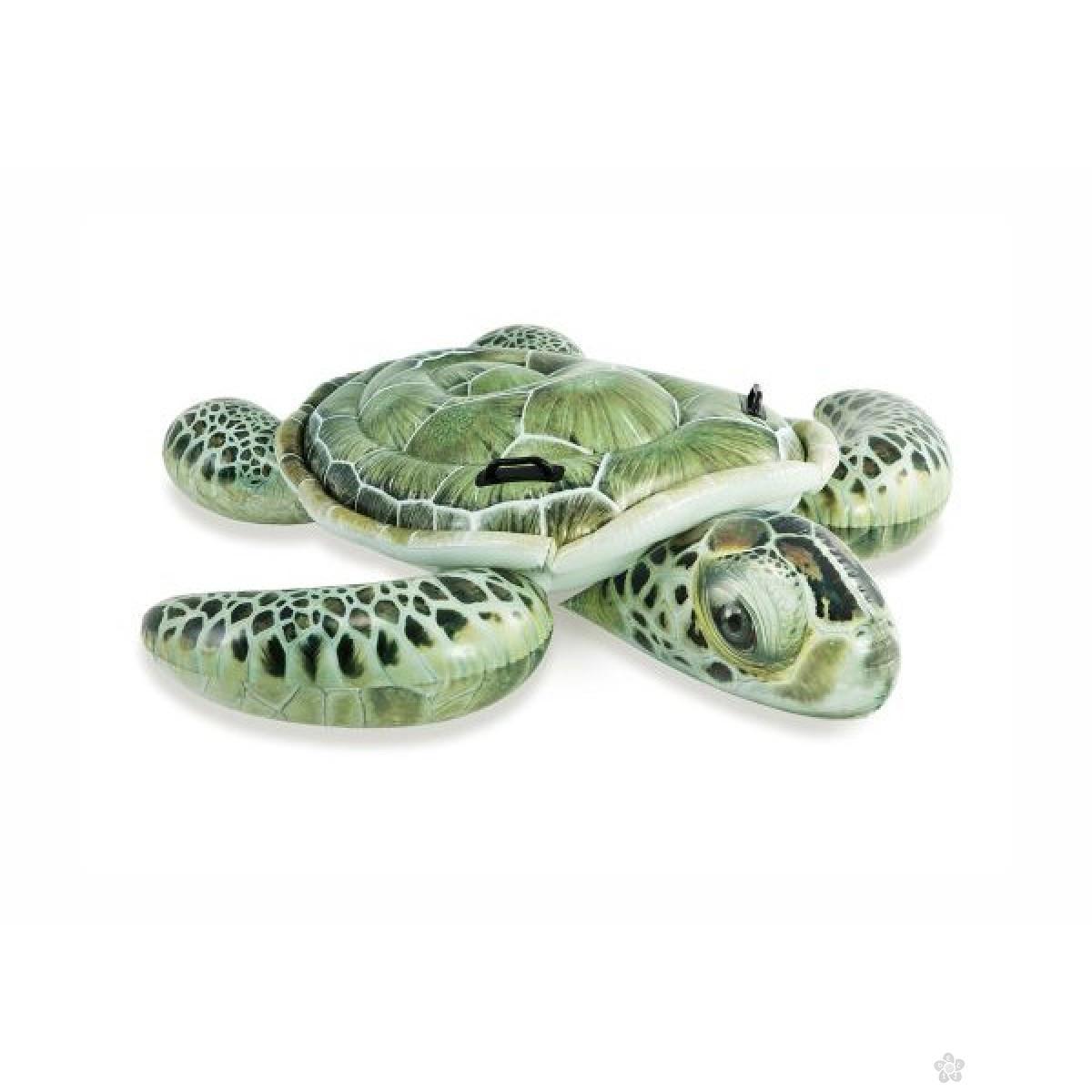 Dušek u obliku kornjače, 14/57555NPI