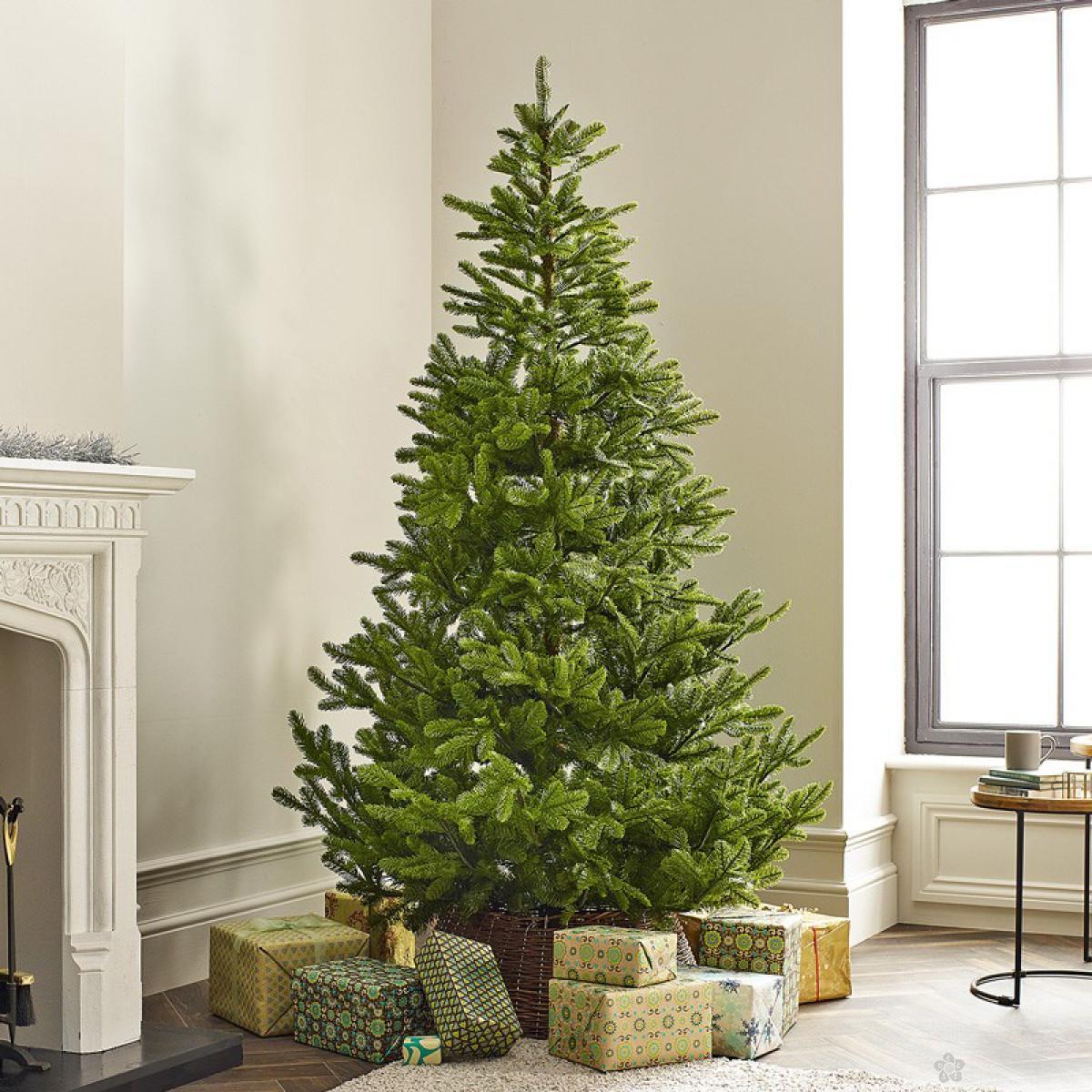 Novogodišnja jelka Koreana Spruce 180cm 68.9981