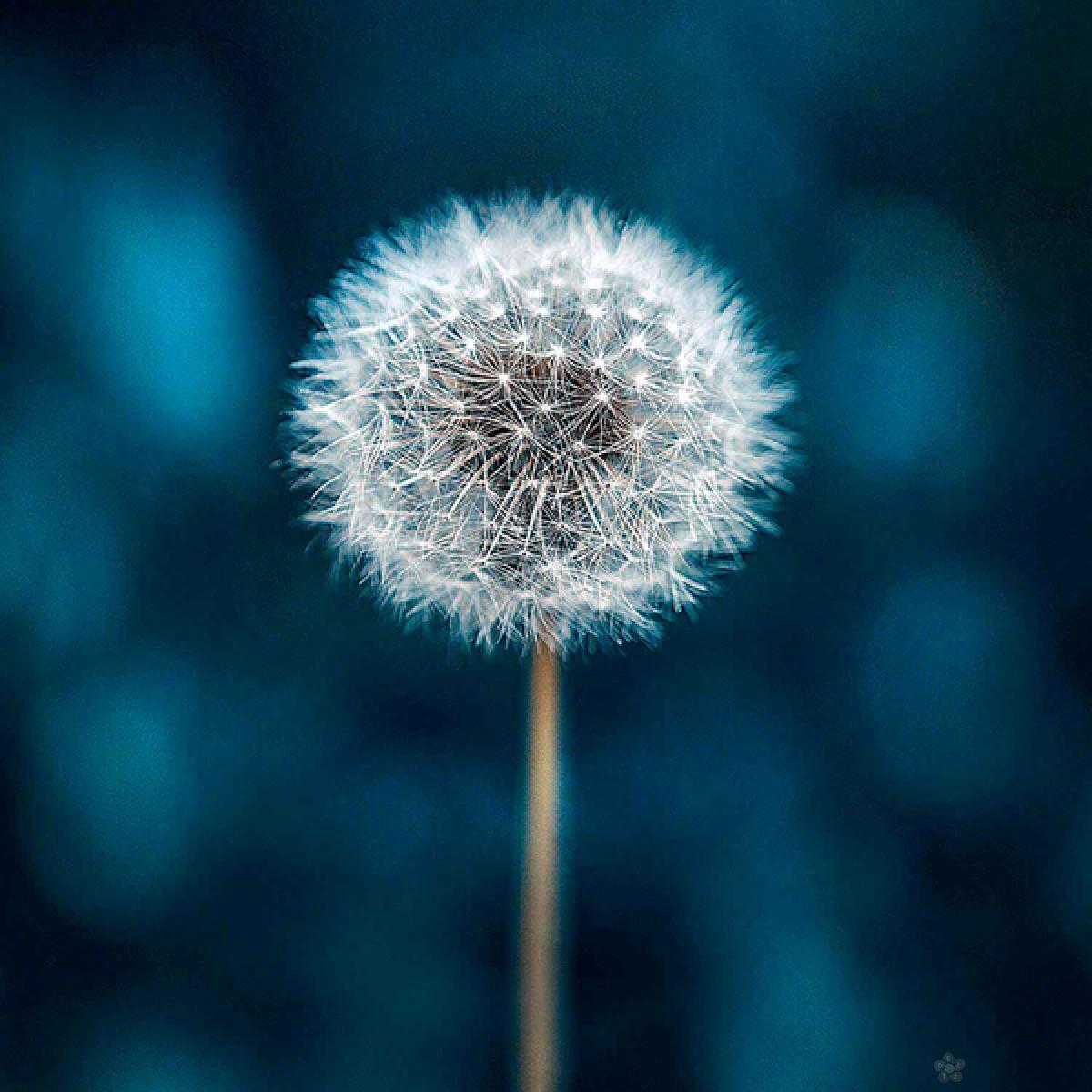 Ram puzzla Make a wish, 250pcs 38505