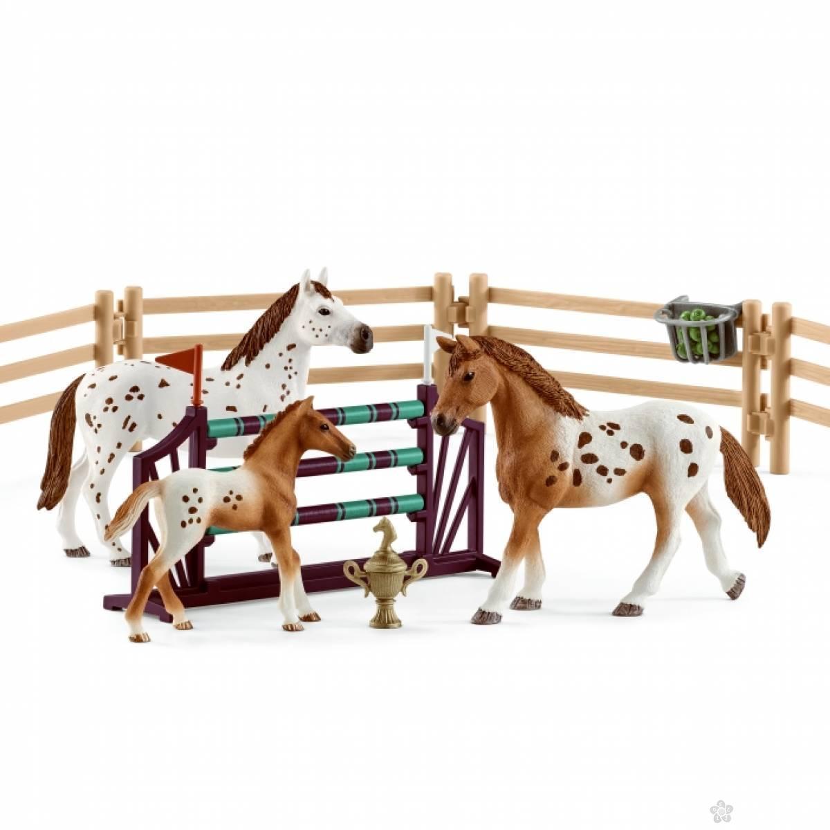 Turnirski trening konja